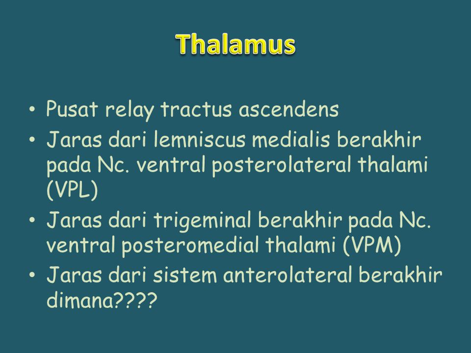 Thalamus Pusat relay tractus ascendens