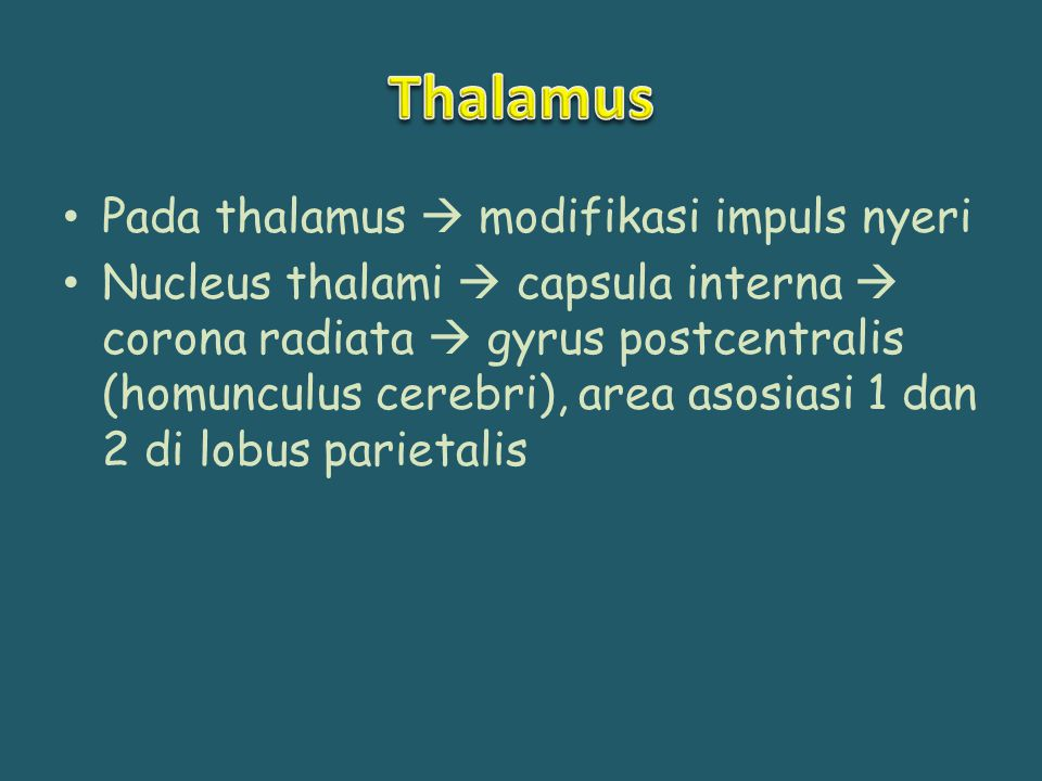 Thalamus Pada thalamus  modifikasi impuls nyeri