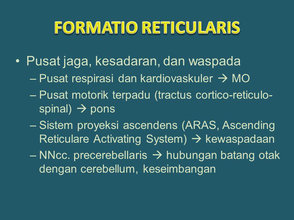 FORMATIO RETICULARIS Pusat jaga, kesadaran, dan waspada