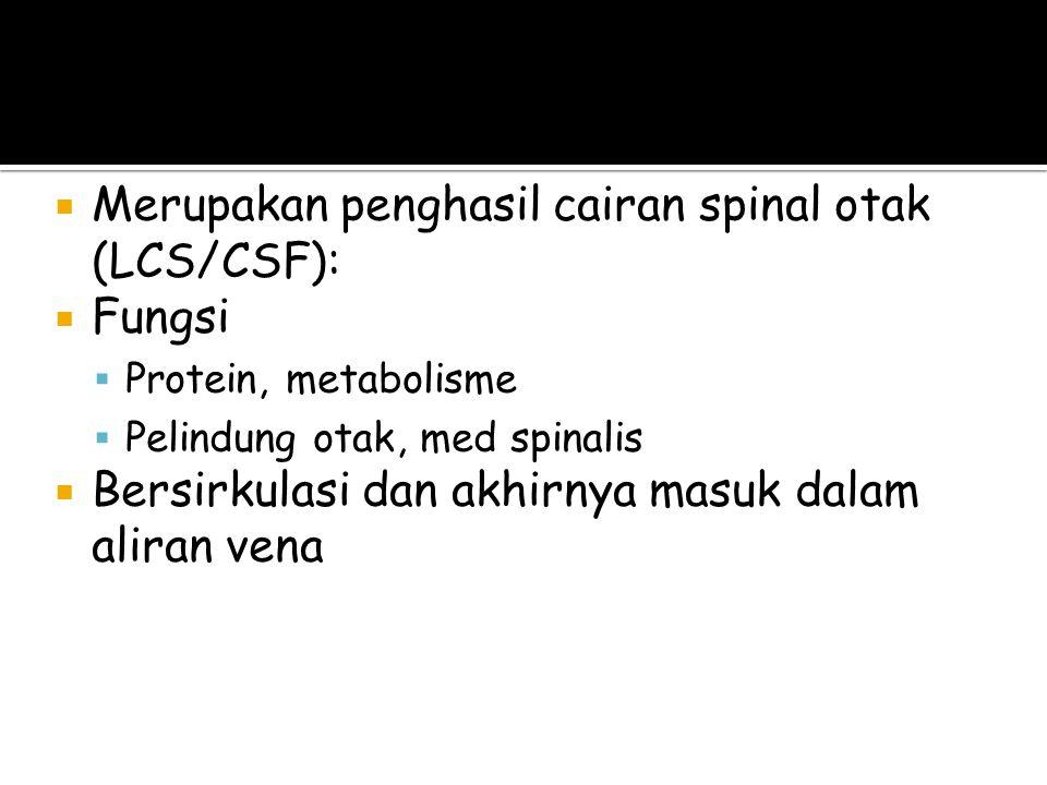Sistem Ventrikel (LCS)
