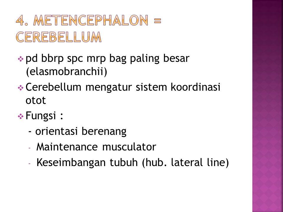 4. Metencephalon = Cerebellum