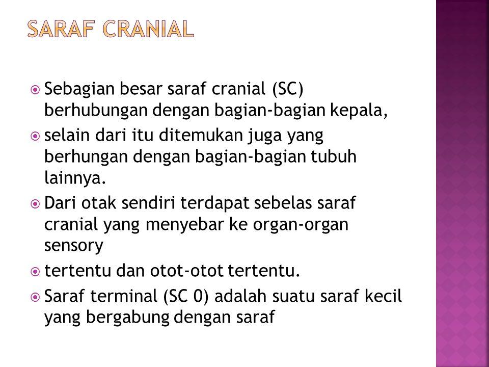 SARAF CRANIAL Sebagian besar saraf cranial (SC) berhubungan dengan bagian-bagian kepala,