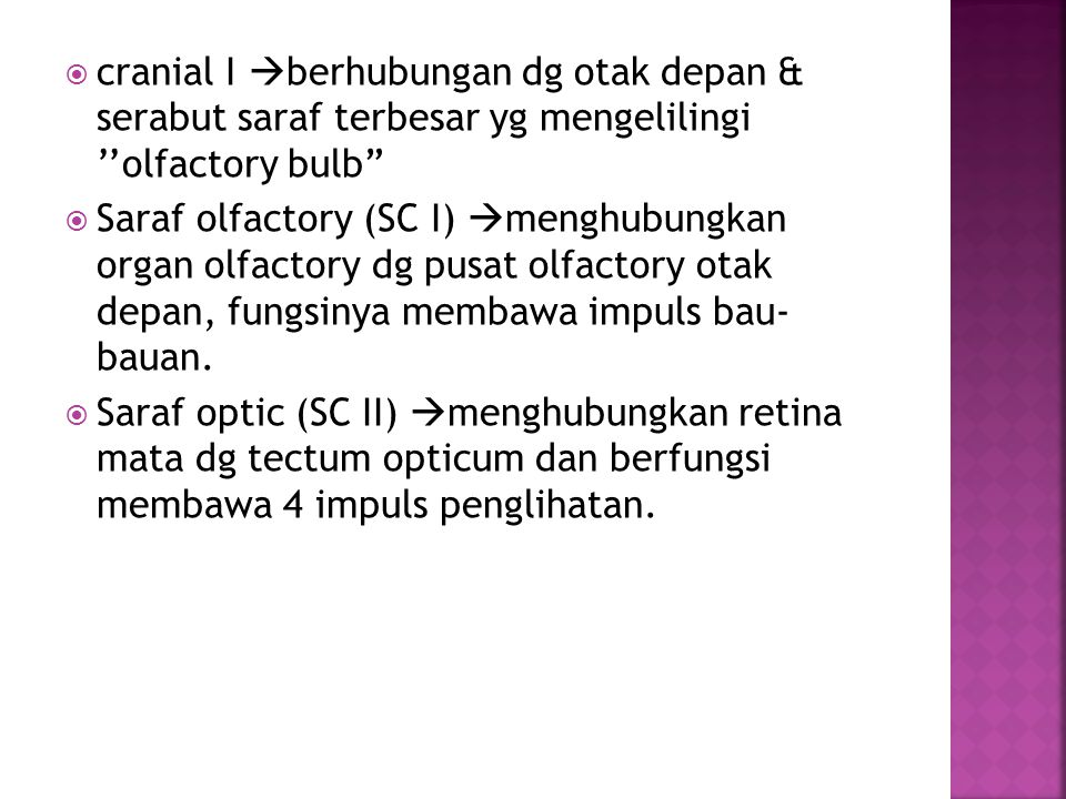 cranial I berhubungan dg otak depan & serabut saraf terbesar yg mengelilingi ''olfactory bulb