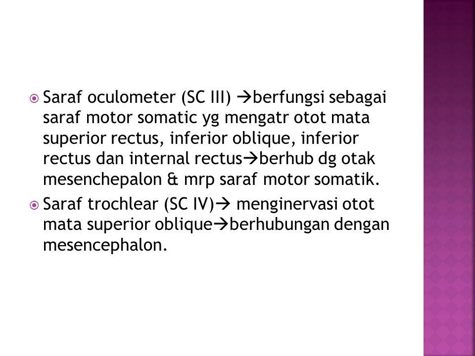 Saraf oculometer (SC III) berfungsi sebagai saraf motor somatic yg mengatr otot mata superior rectus, inferior oblique, inferior rectus dan internal rectusberhub dg otak mesenchepalon & mrp saraf motor somatik.