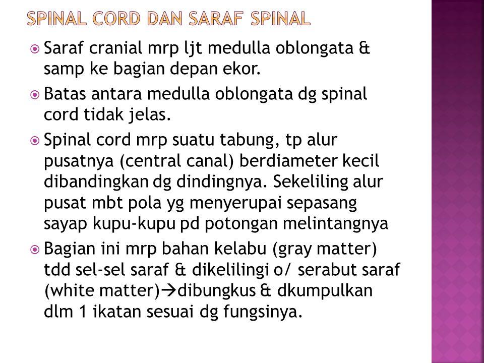 SPINAL CORD DAN SARAF SPINAL
