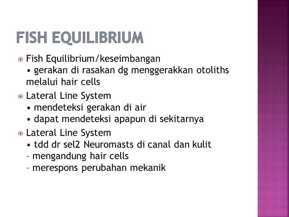 Fish Equilibrium Fish Equilibrium/keseimbangan • gerakan di rasakan dg menggerakkan otoliths melalui hair cells.