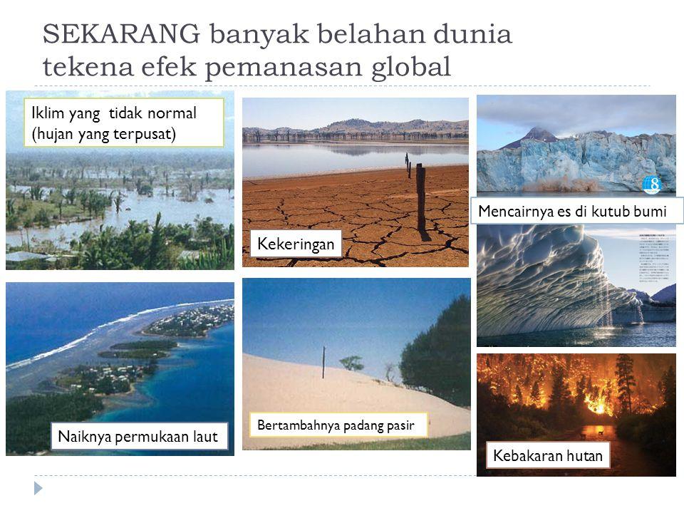 SEKARANG banyak belahan dunia tekena efek pemanasan global