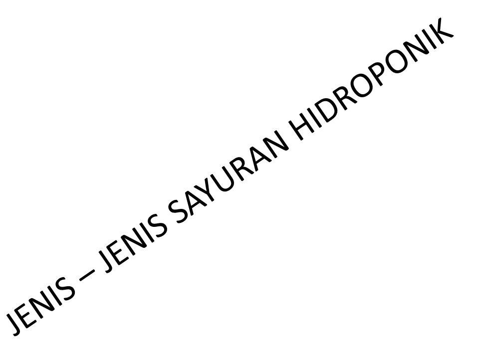 JENIS – JENIS SAYURAN HIDROPONIK