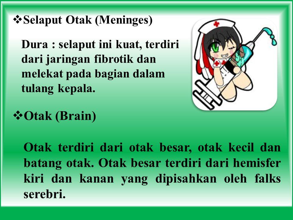 Selaput Otak (Meninges)