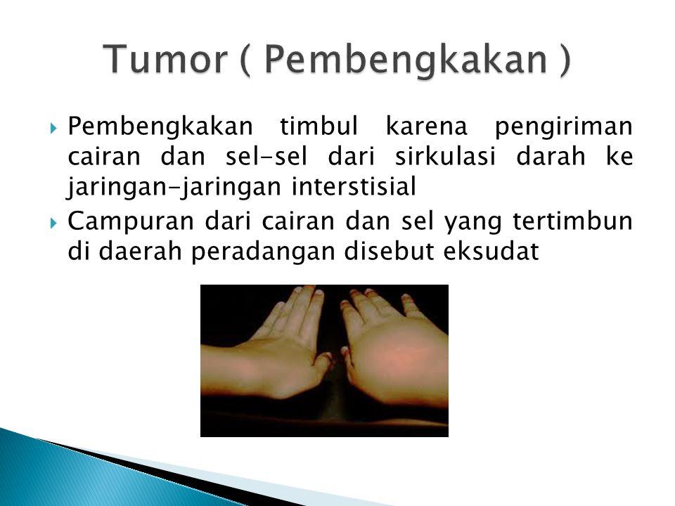Tumor ( Pembengkakan ) Pembengkakan timbul karena pengiriman cairan dan sel-sel dari sirkulasi darah ke jaringan-jaringan interstisial.