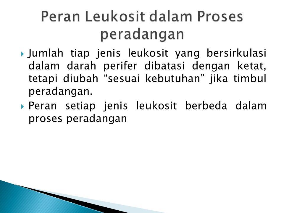 Peran Leukosit dalam Proses peradangan