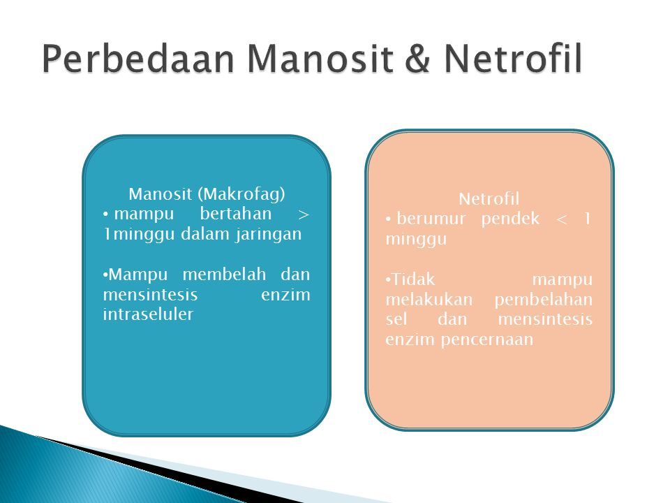 Perbedaan Manosit & Netrofil