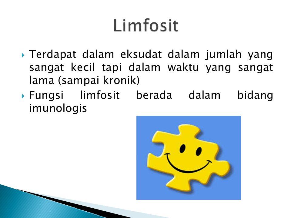 Limfosit Terdapat dalam eksudat dalam jumlah yang sangat kecil tapi dalam waktu yang sangat lama (sampai kronik)