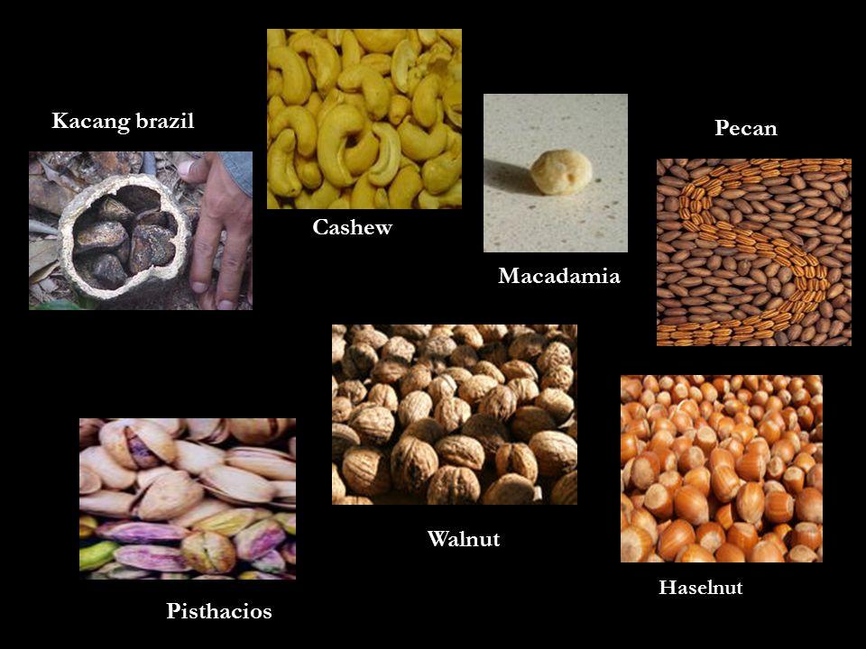 Kacang brazil Pecan Macadamia Walnut Pisthacios