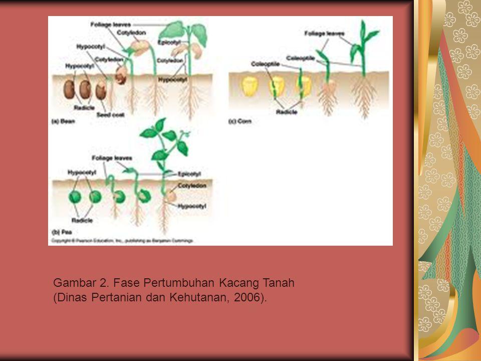 Gambar 2. Fase Pertumbuhan Kacang Tanah