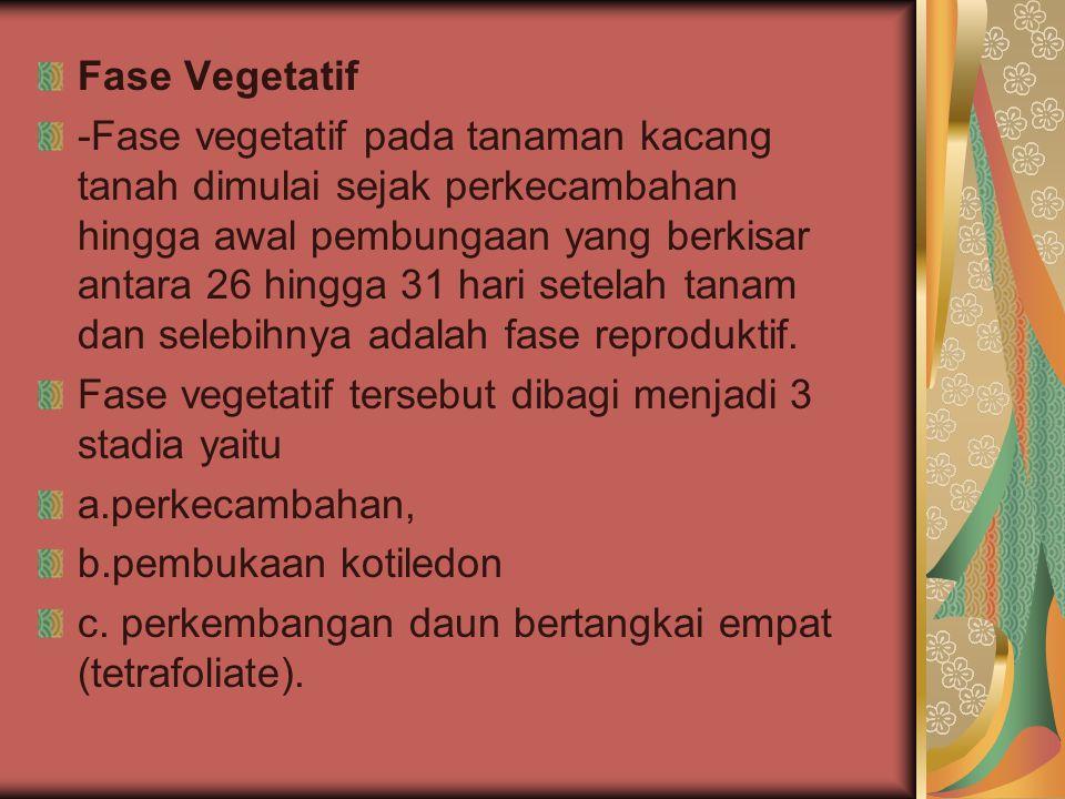 Fase Vegetatif