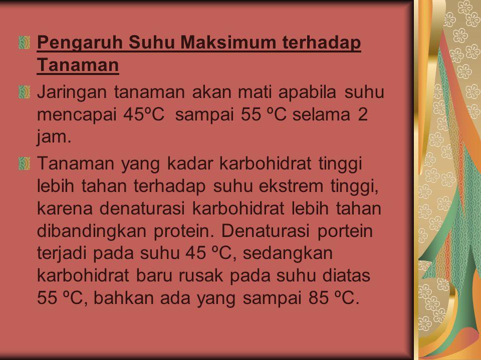 Pengaruh Suhu Maksimum terhadap Tanaman
