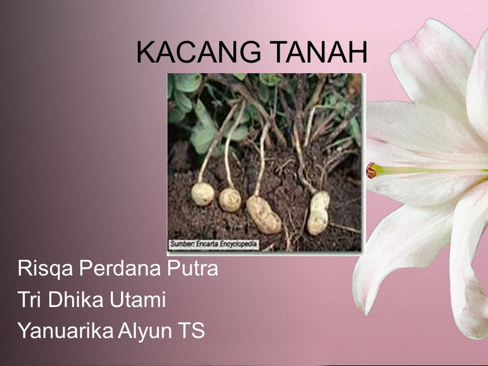 Risqa Perdana Putra Tri Dhika Utami Yanuarika Alyun TS
