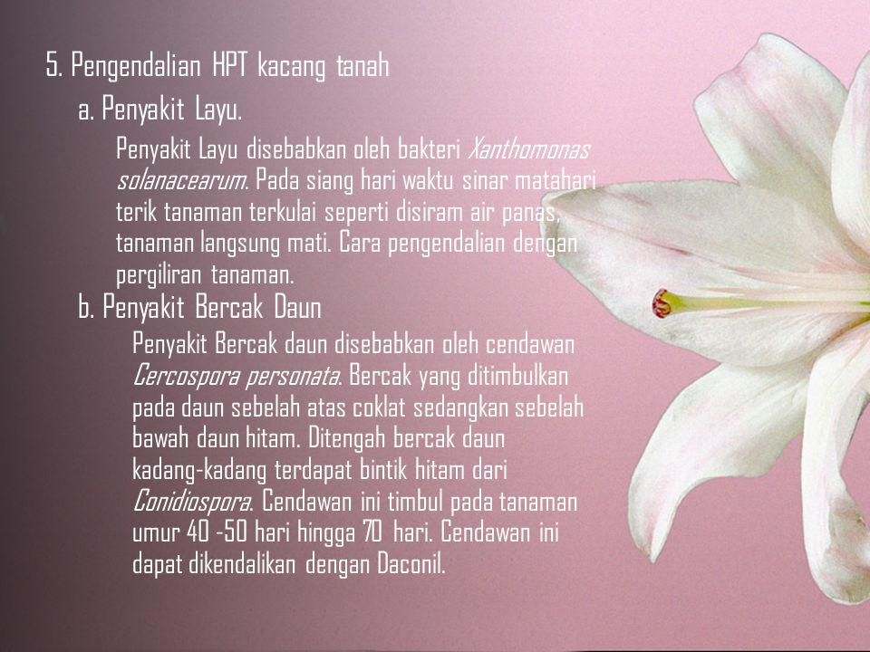 5. Pengendalian HPT kacang tanah a. Penyakit Layu.