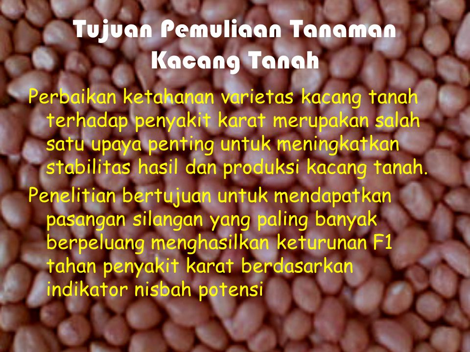 Tujuan Pemuliaan Tanaman Kacang Tanah