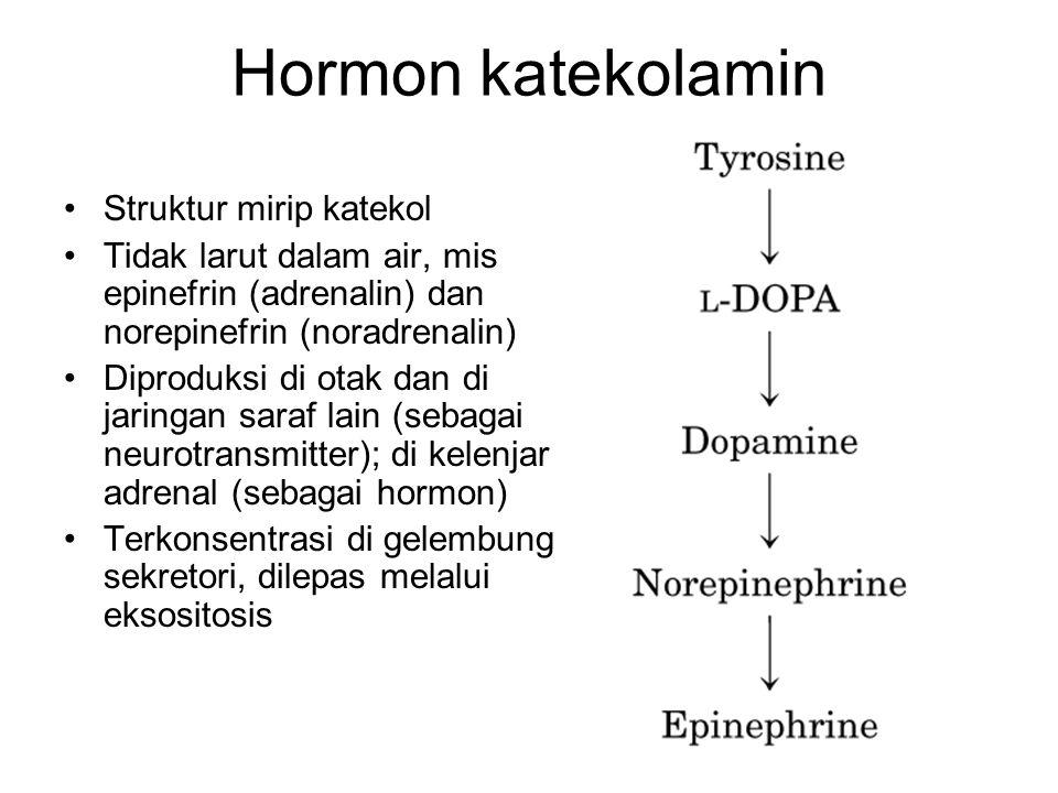 Hormon katekolamin Struktur mirip katekol