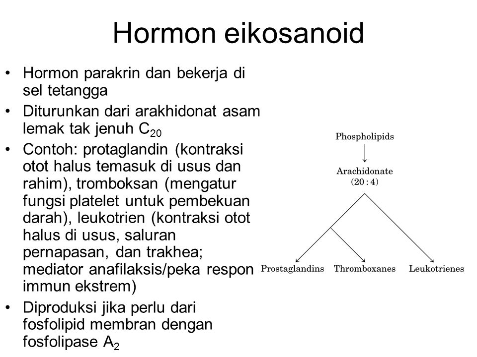 Hormon eikosanoid Hormon parakrin dan bekerja di sel tetangga