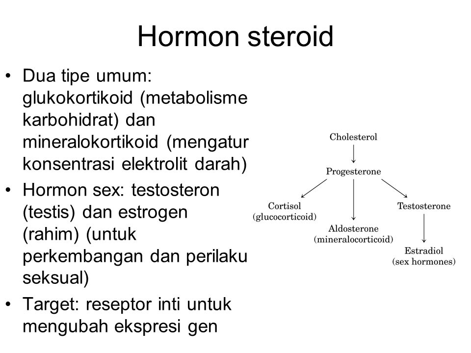 Hormon steroid Dua tipe umum: glukokortikoid (metabolisme karbohidrat) dan mineralokortikoid (mengatur konsentrasi elektrolit darah)