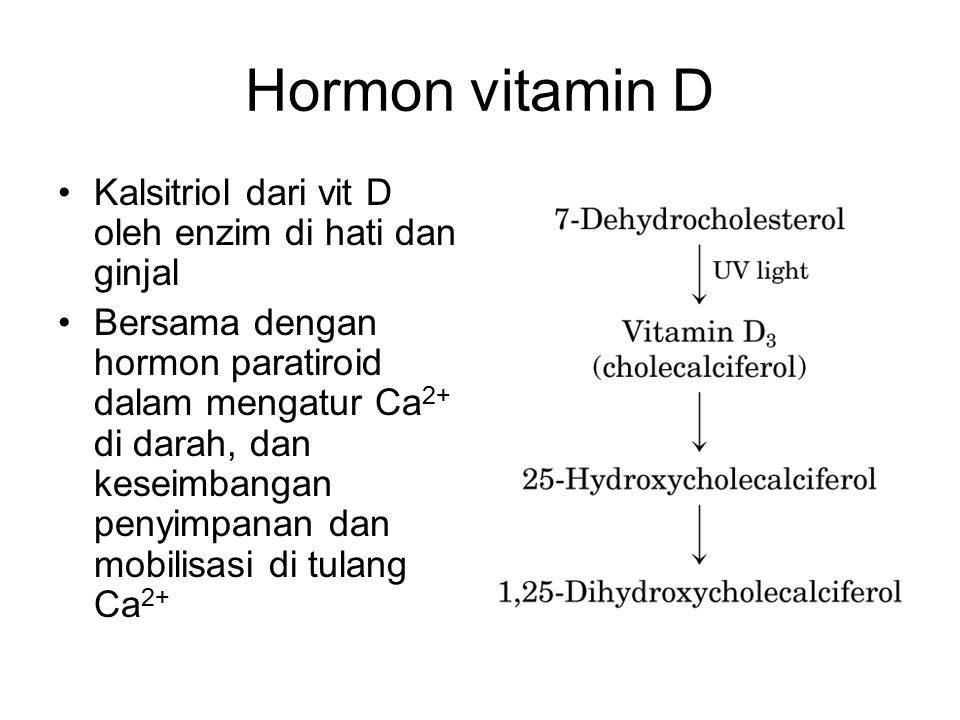 Hormon vitamin D Kalsitriol dari vit D oleh enzim di hati dan ginjal