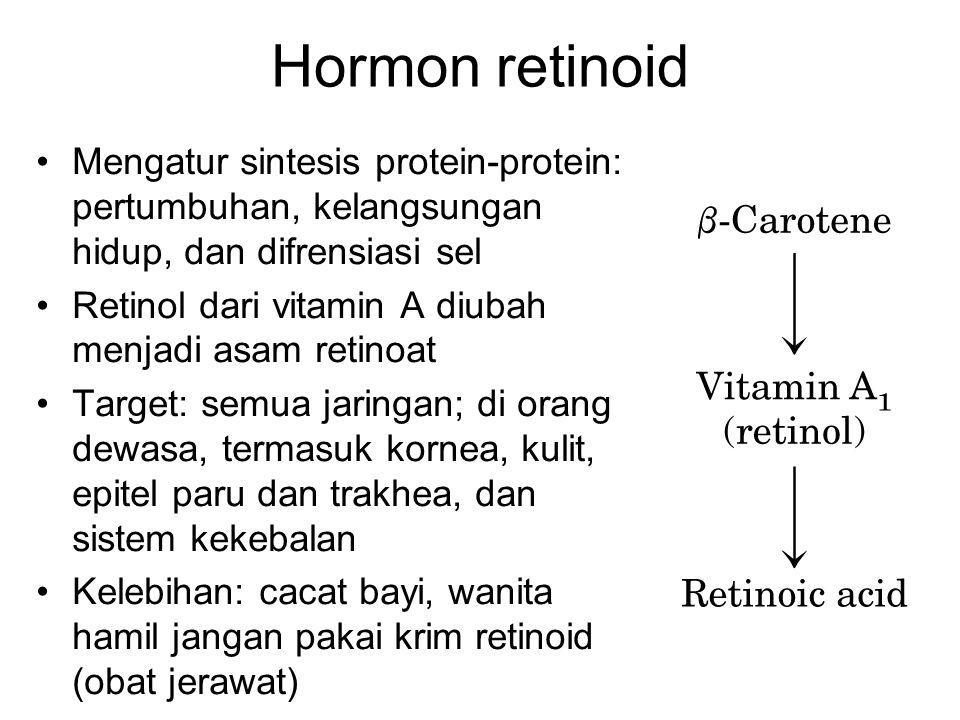 Hormon retinoid Mengatur sintesis protein-protein: pertumbuhan, kelangsungan hidup, dan difrensiasi sel.