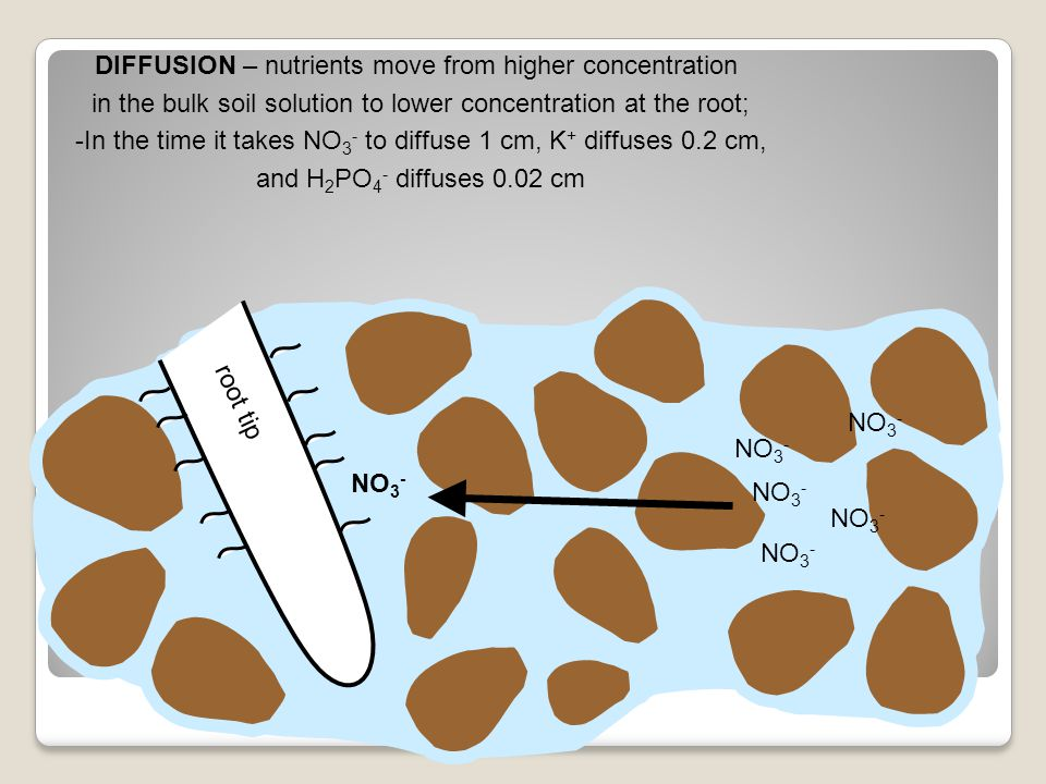 DIFFUSION – nutrients move from higher concentration