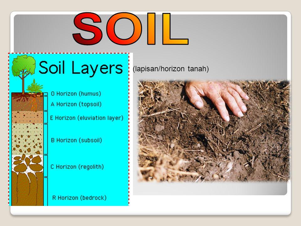 SOIL (lapisan/horizon tanah)