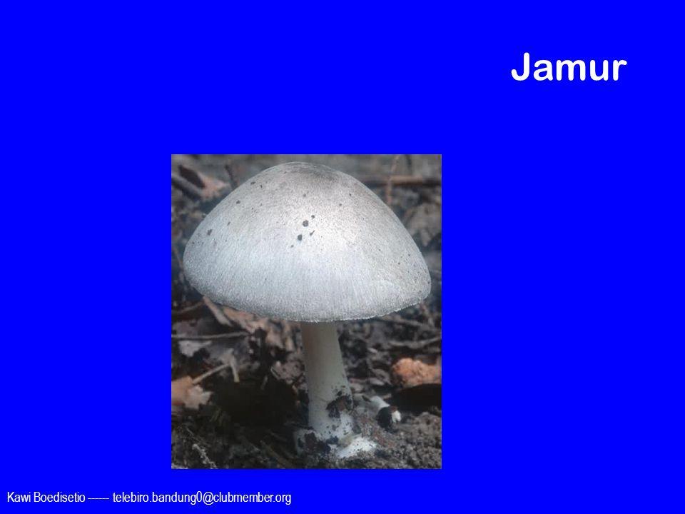Jamur Kawi Boedisetio ------ telebiro.bandung0@clubmember.org
