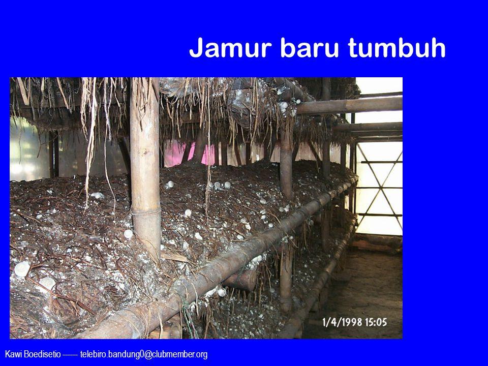 Jamur baru tumbuh Kawi Boedisetio ------ telebiro.bandung0@clubmember.org