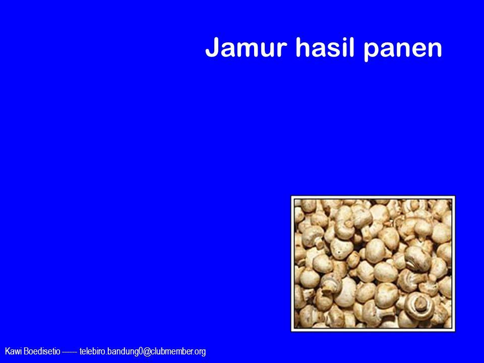 Jamur hasil panen Kawi Boedisetio ------ telebiro.bandung0@clubmember.org