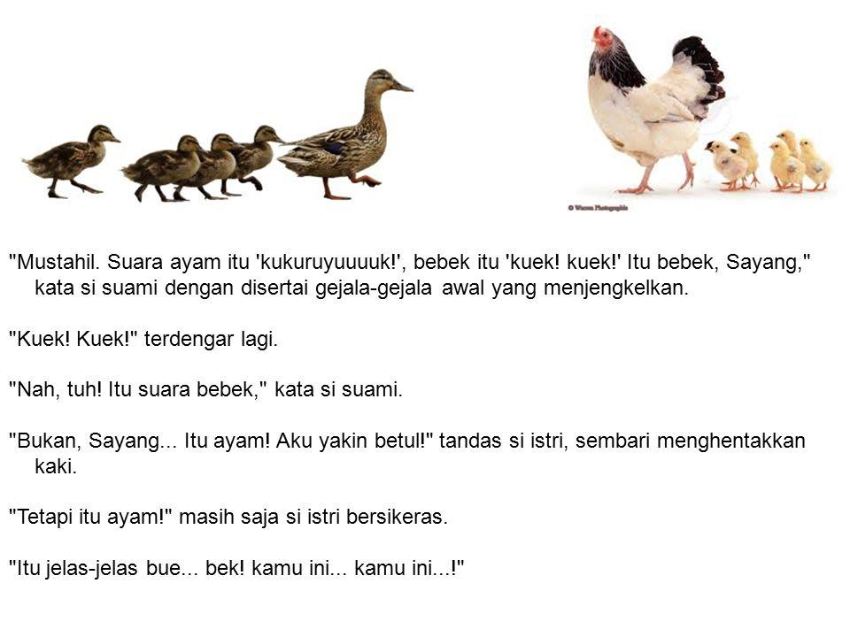 Mustahil. Suara ayam itu kukuruyuuuuk. , bebek itu kuek. kuek