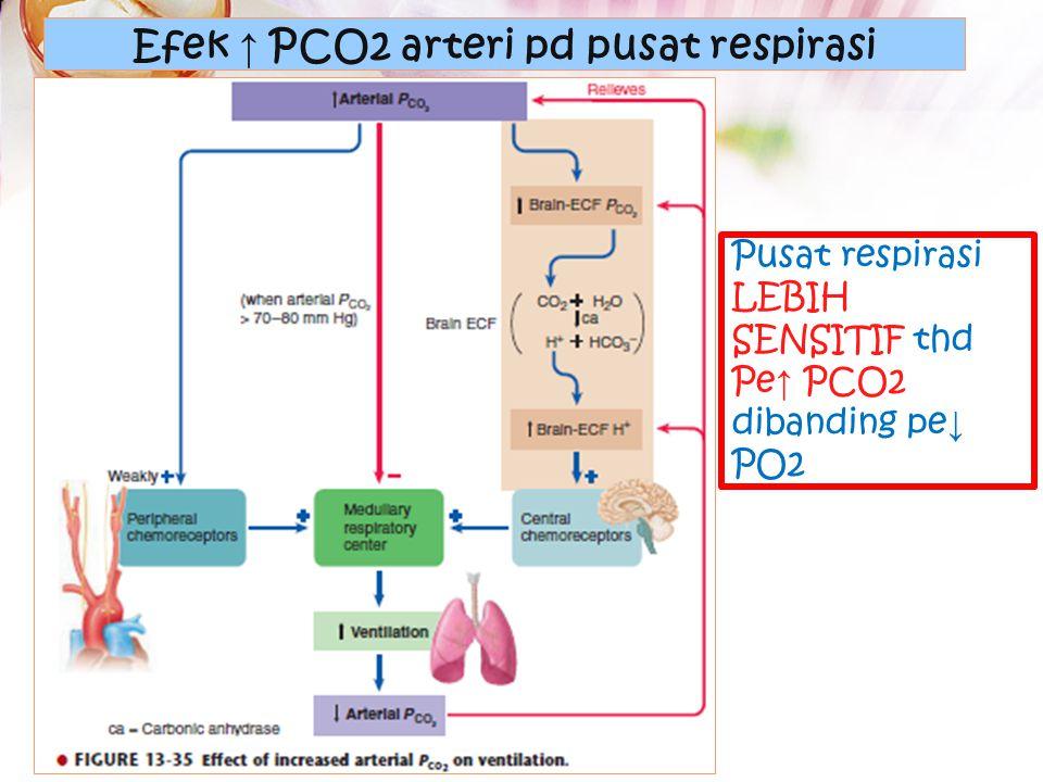 Efek ↑ PCO2 arteri pd pusat respirasi