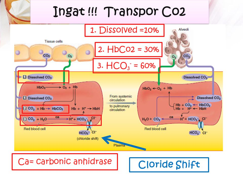 Ca= carbonic anhidrase