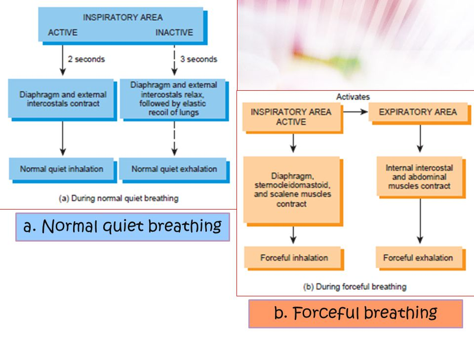 a. Normal quiet breathing