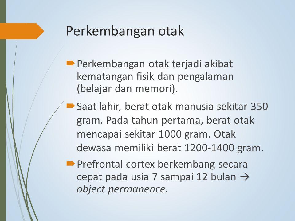 Perkembangan otak Perkembangan otak terjadi akibat kematangan fisik dan pengalaman (belajar dan memori).