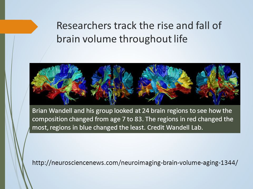Researchers track the rise and fall of brain volume throughout life