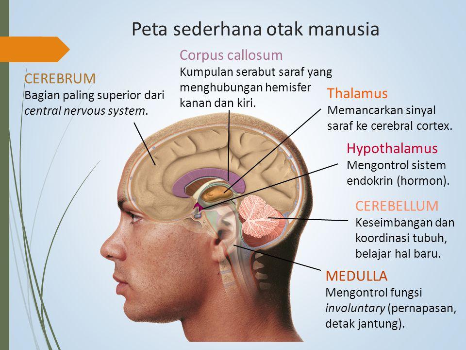 Peta sederhana otak manusia