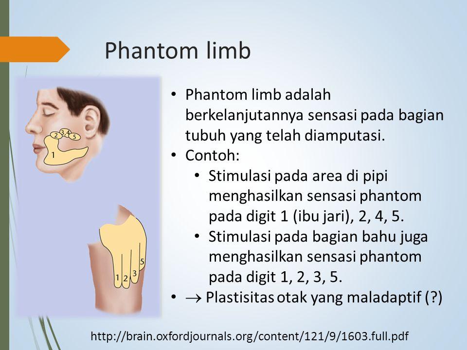 Phantom limb Phantom limb adalah berkelanjutannya sensasi pada bagian tubuh yang telah diamputasi. Contoh:
