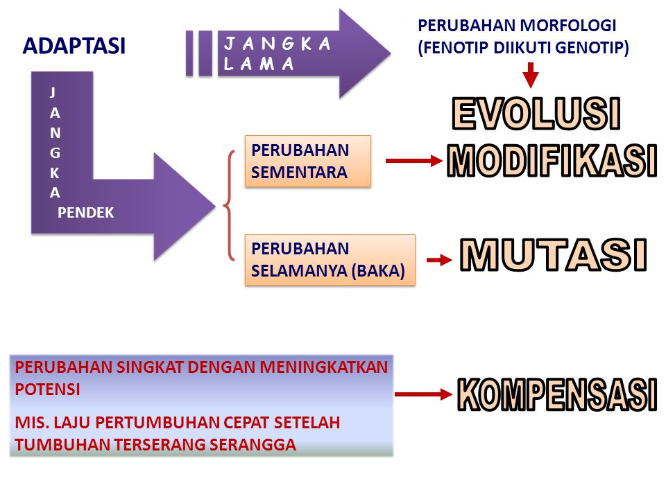 EVOLUSI MODIFIKASI MUTASI KOMPENSASI ADAPTASI