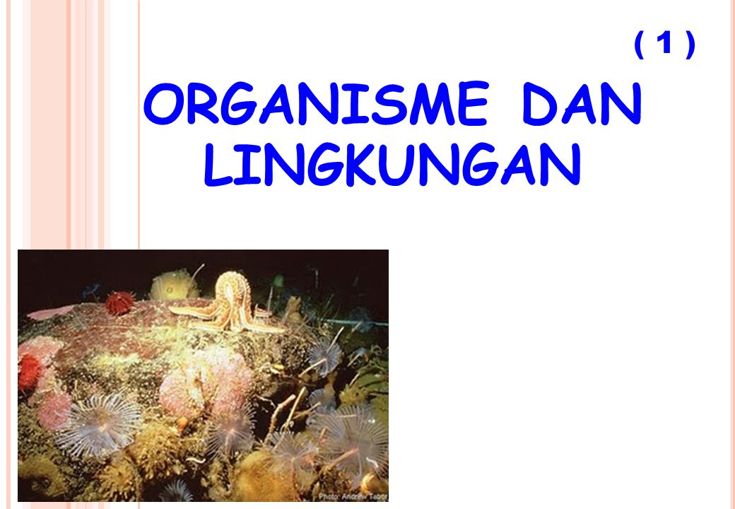 organisme dan lingkungan
