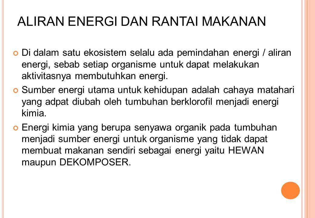 ALIRAN ENERGI DAN RANTAI MAKANAN