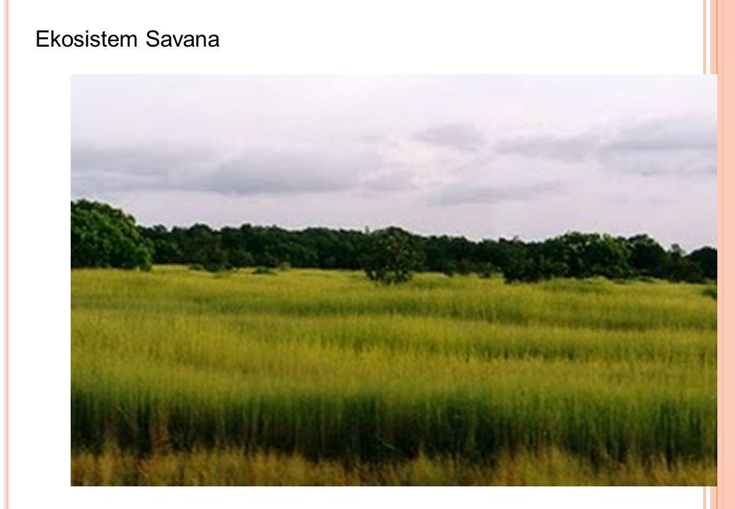 Ekosistem Savana