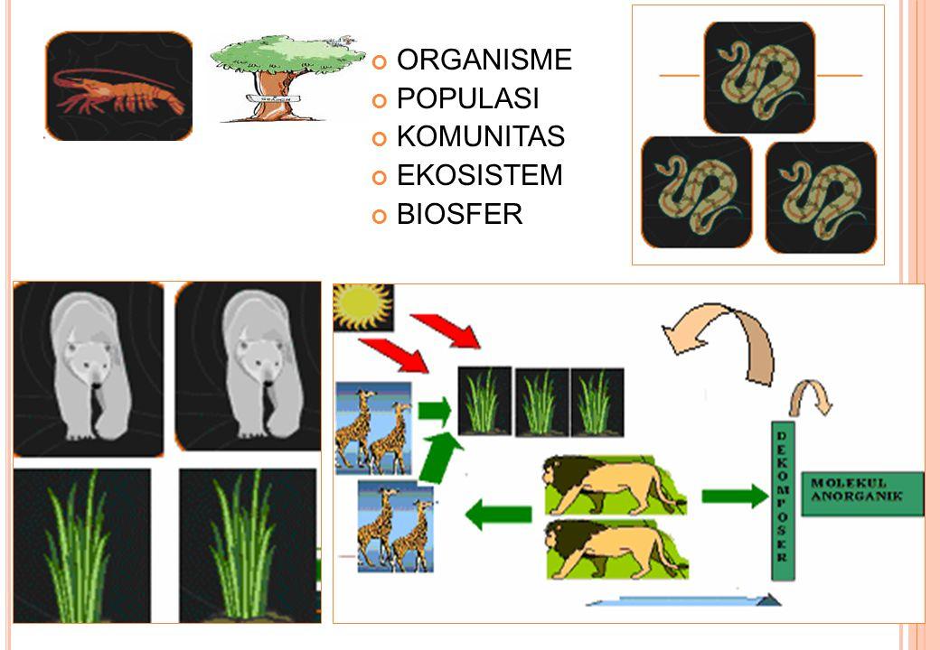 ORGANISME POPULASI KOMUNITAS EKOSISTEM BIOSFER