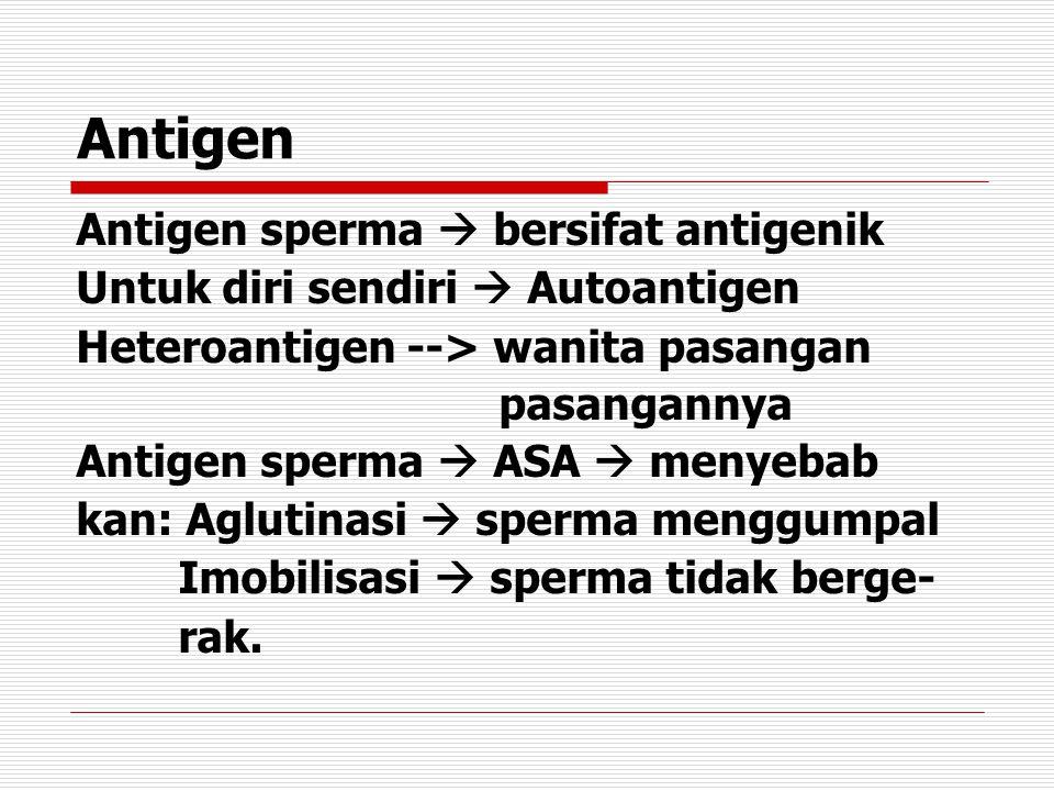 Antigen Antigen sperma  bersifat antigenik
