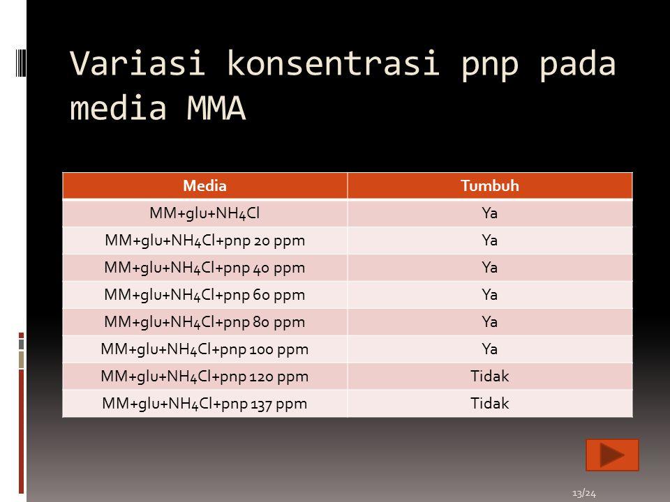 Variasi konsentrasi pnp pada media MMA
