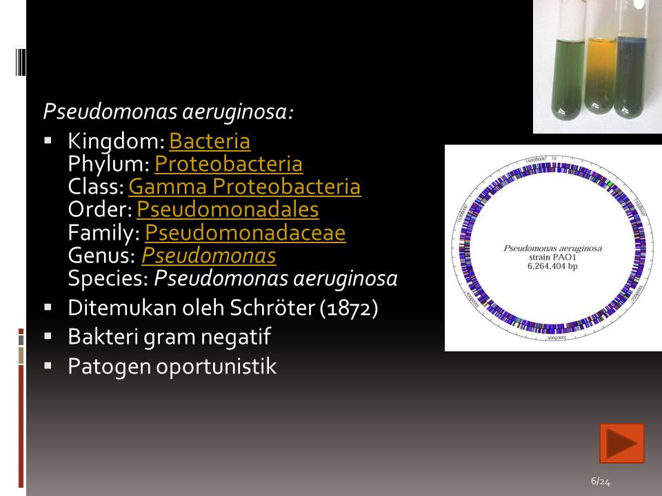 Pseudomonas aeruginosa: